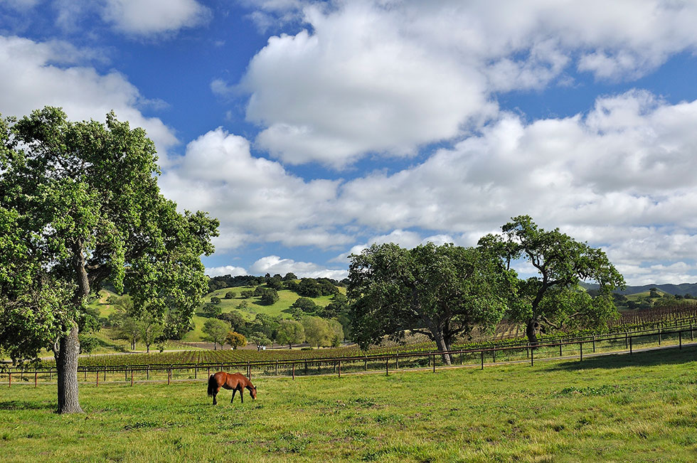 Dovecote horse and clouds